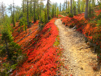 Pacific Crest Trail - Fall Study 2